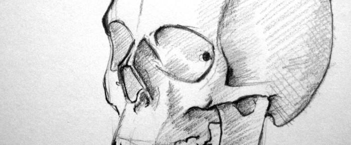 Portretul vazut din semiprofil – exercitiu de anatomie