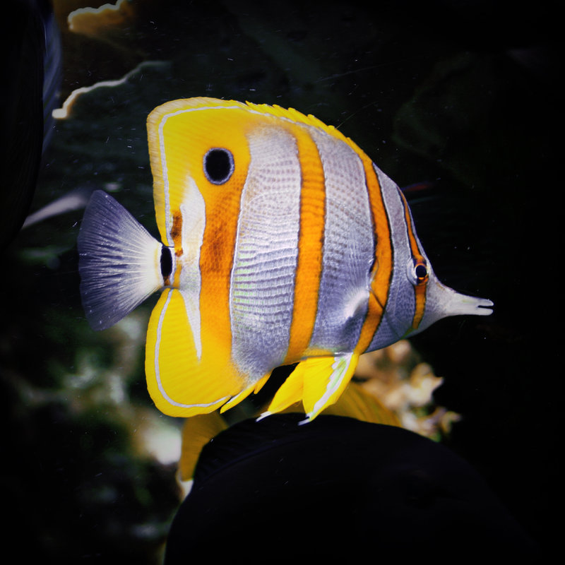 Fish_by_esistrot
