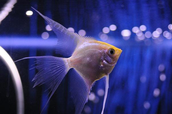 Fish_by_nikolazzz