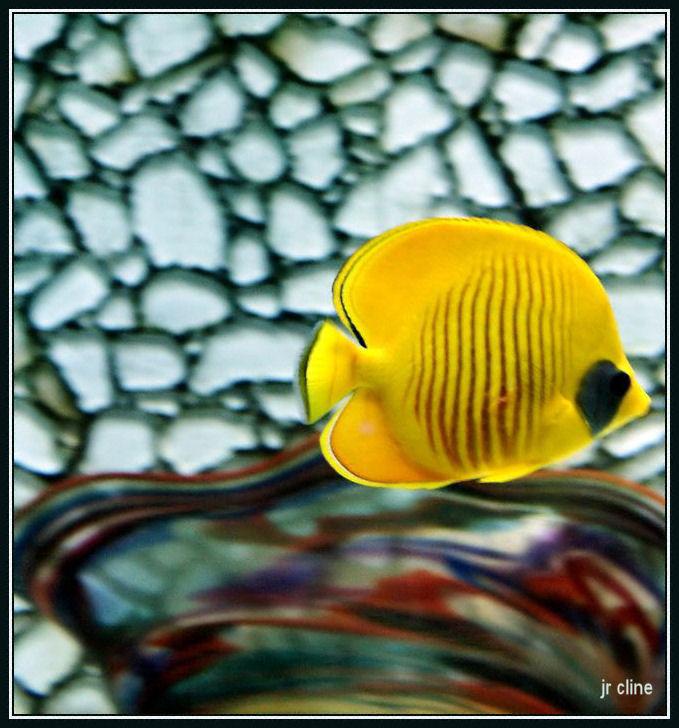 Yellow_fish_by_eskimoblueboy