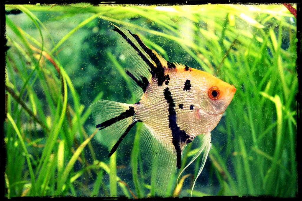 fish_by_tigrite-d5ldc7c