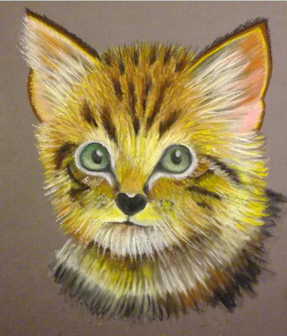 pisica-11