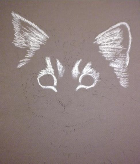 pisica-2