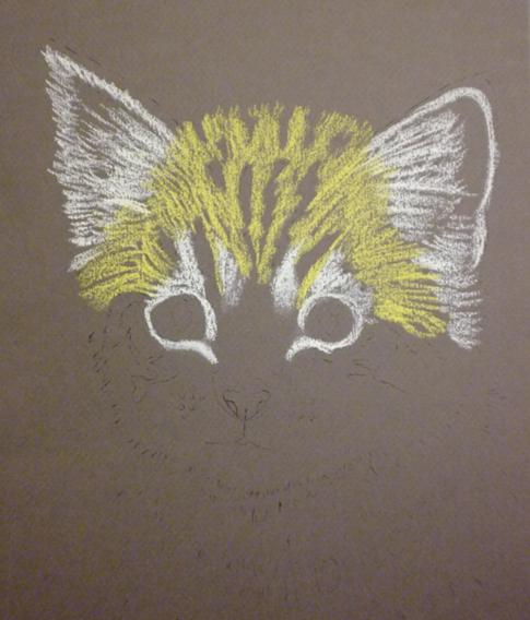 pisica-3