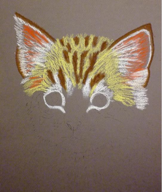 pisica-4