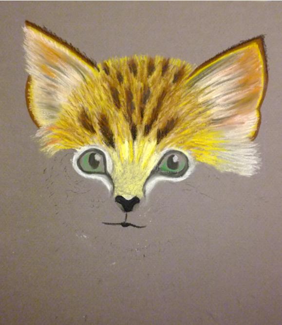 pisica-7