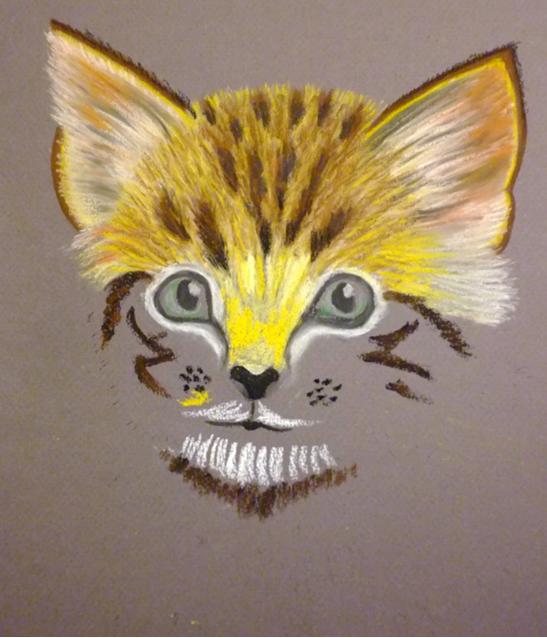pisica-9