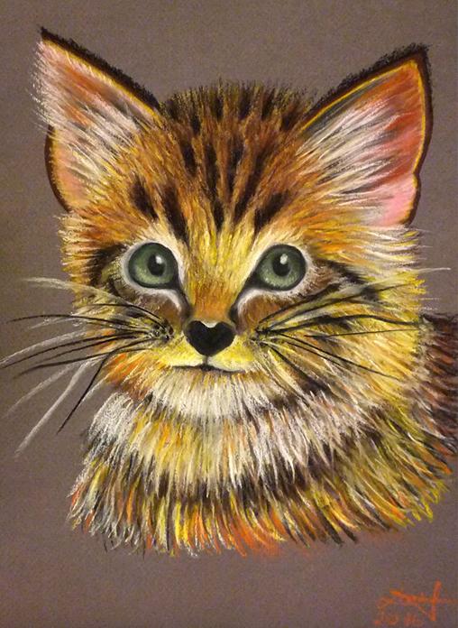 pisica-intreg